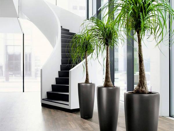 искусственные деревья оптом из Китая